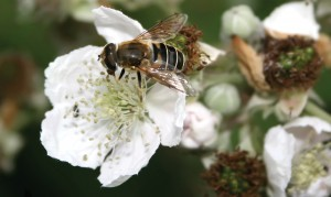 80 per cent of bees tested have neonicotinoids in their system.