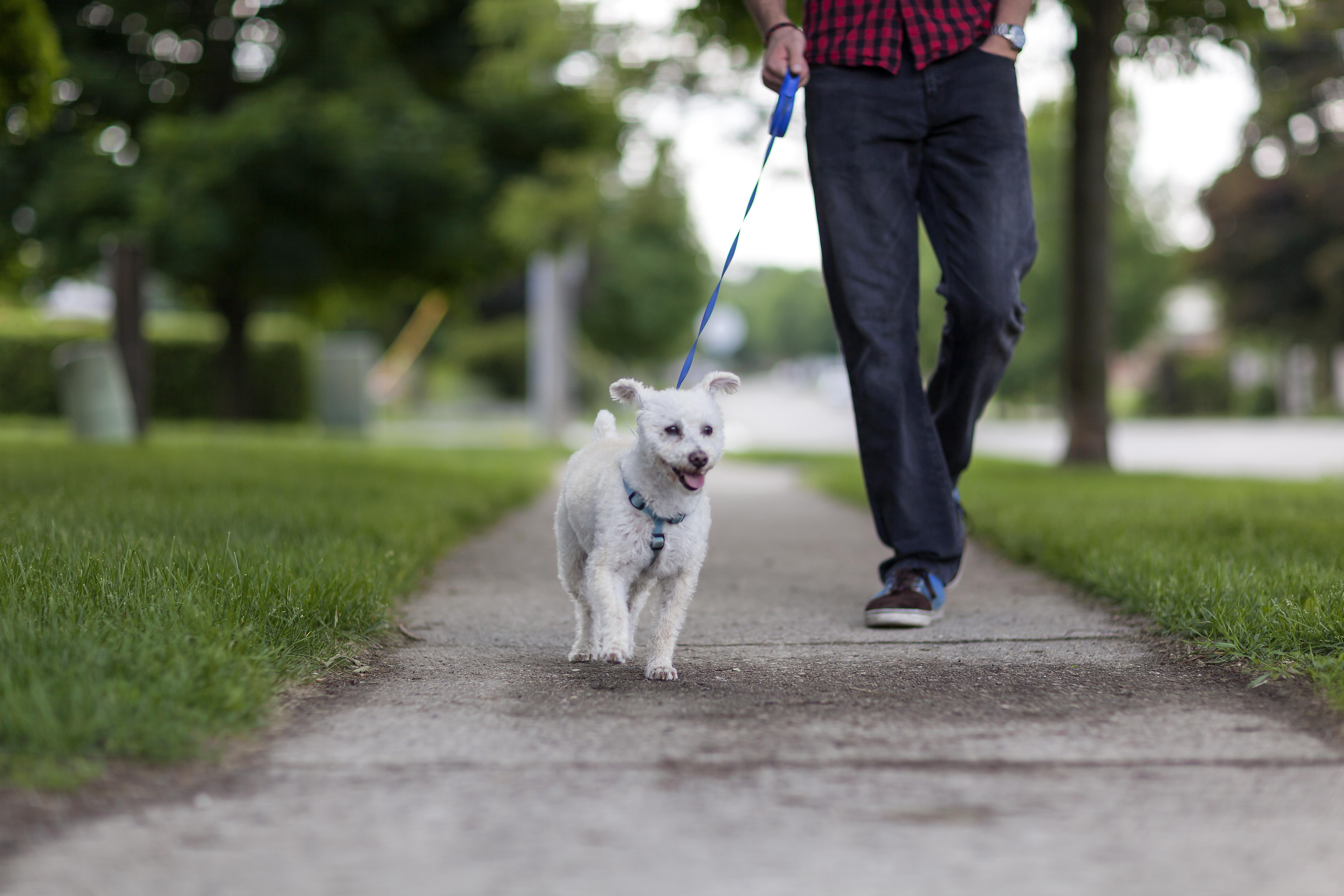 Walking  Dogs Tip