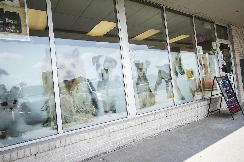 Pet store (Heather Davidson)